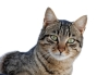 cat_march_2010-1